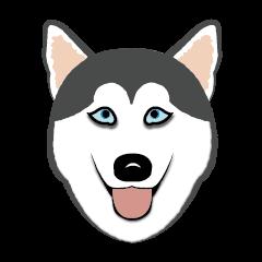 Huskies lover