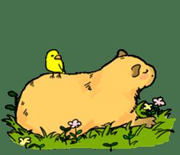 Capybara Life sticker #4420875