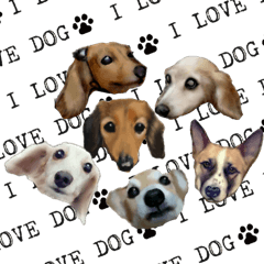 real DOG Sticker