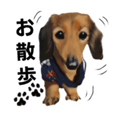 real DOG Sticker sticker #4503289
