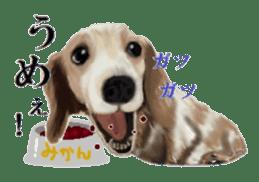 real DOG Sticker sticker #4503296