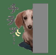 real DOG Sticker sticker #4503299
