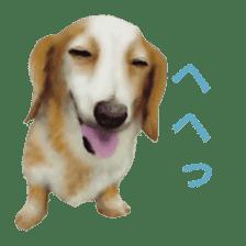 real DOG Sticker sticker #4503307