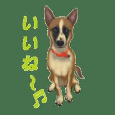 real DOG Sticker sticker #4503309