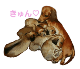 real DOG Sticker sticker #4503323