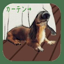 real DOG Sticker sticker #4503325