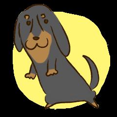 I'm a dachshund.