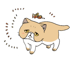 Exotic shorthair cats sticker #4574432