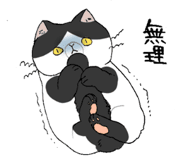 Exotic shorthair cats sticker #4574448