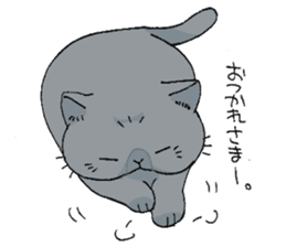 Exotic shorthair cats sticker #4574449