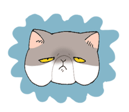 Exotic shorthair cats sticker #4574452