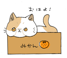 Exotic shorthair cats sticker #4574455