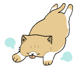 Exotic shorthair cats sticker #4574458