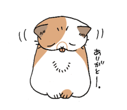 Exotic shorthair cats sticker #4574463