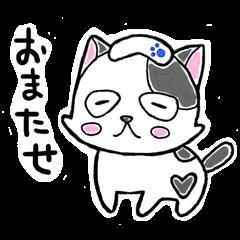 """SHIRO"" the Onsen street cat"