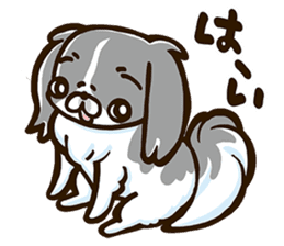 Japanese chin sticker 01 sticker #4617960