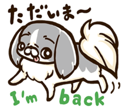 Japanese chin sticker 01 sticker #4617988