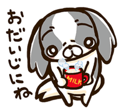 Japanese chin sticker 01 sticker #4617998