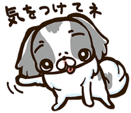 Japanese chin sticker 01 sticker #4617999