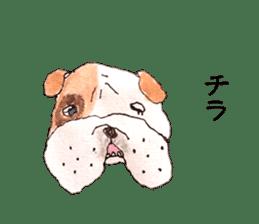 Friend of the bulldog sticker #4618750