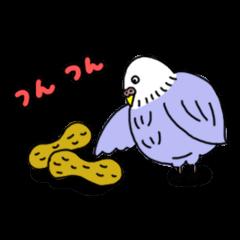 Funny Parakeet!