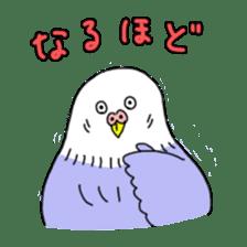 Funny Parakeet! sticker #4634366
