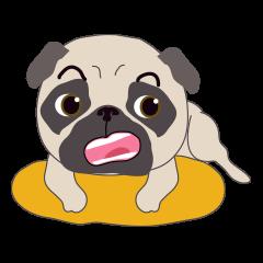 Baby Funny Pug