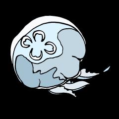 jellyfish picture sticker