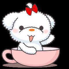 Cotton Puppy