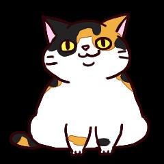 Syo-chan,calico cat