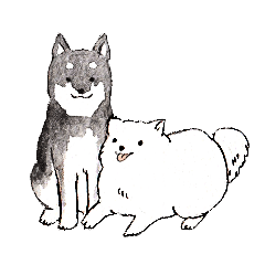 Black-and-white dogs