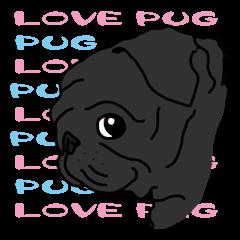 Cute & funny pug