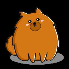 Naughty Pomeranian