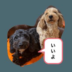 สติ๊กเกอร์ไลน์ marikolady's 6dogs
