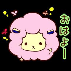season sheep