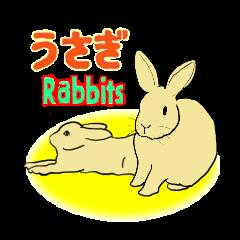 House Rabbits!