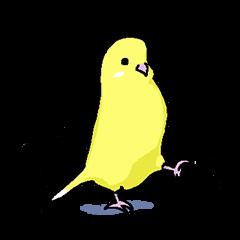 yellow budgie