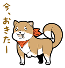 Cute! Funny dog and annoying cat sticker #5131007