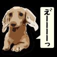 リアル犬's