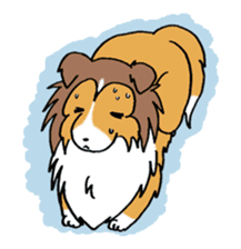Cute sheltie sticker #5161816