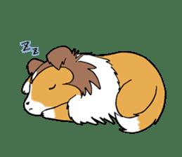 Cute sheltie sticker #5161832