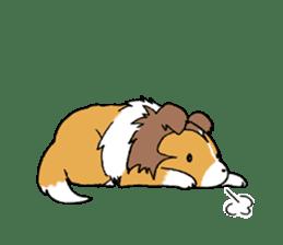 Cute sheltie sticker #5161835
