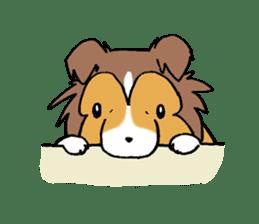 Cute sheltie sticker #5161836