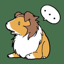 Cute sheltie sticker #5161839