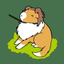 Cute sheltie sticker #5161841