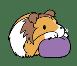 Cute sheltie sticker #5161849