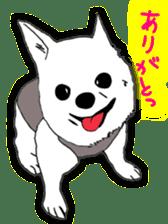 Chihuahua days sticker #5178896