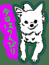 Chihuahua days sticker #5178903