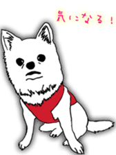 Chihuahua days sticker #5178904
