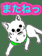 Chihuahua days sticker #5178906